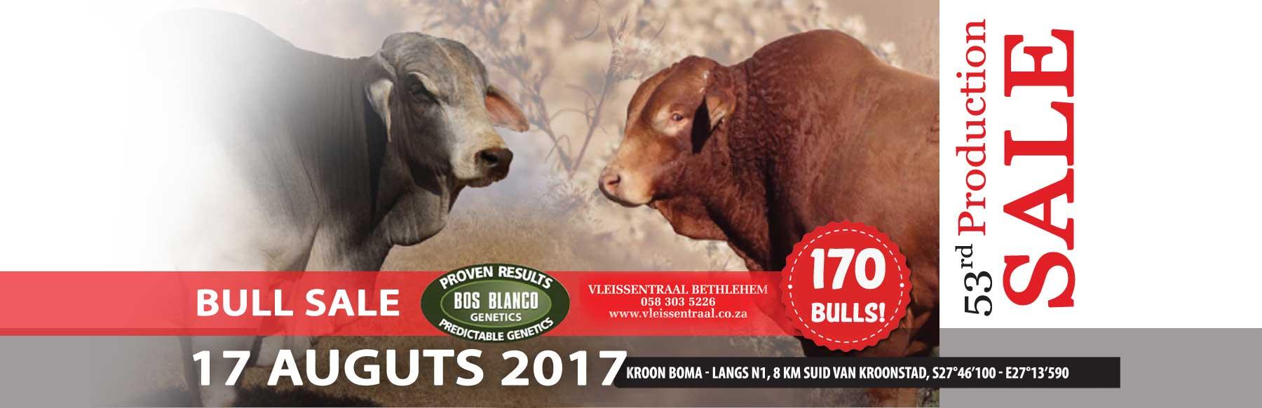 Beefmaster-Bull-Sale-slider-Bos-Blanco